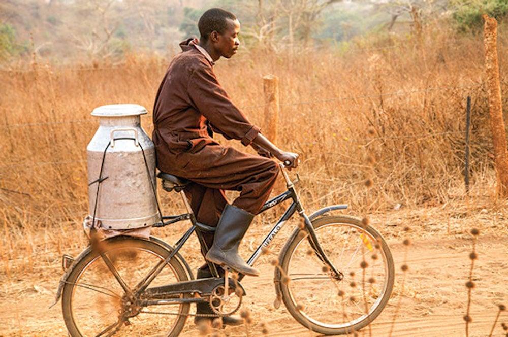 Junge auf Fahrrad transportiert Milchbehälter