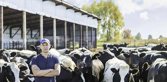Milchkühlung für XL-Robotermelkanlagen